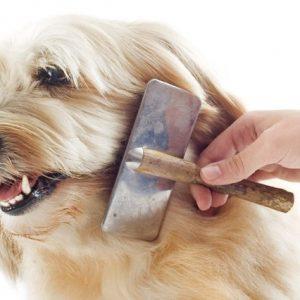 Peines, Cardas, Corta uñas Perros