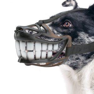 Bozales para perro