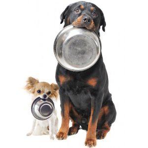 Alimento perro