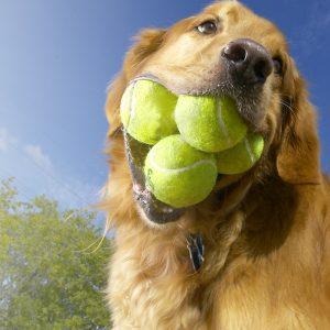 Juguetes para Perros