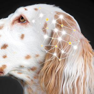 Suplementos para Perro