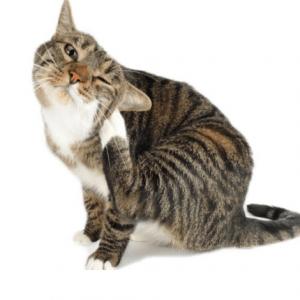 Antiparasitario y Repelente para gato