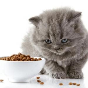 Alimento seco gato