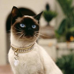 Collares de gato